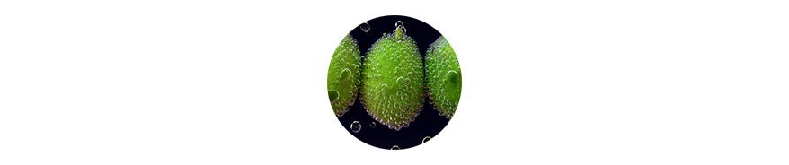 Einlegen grüne oliven wasser