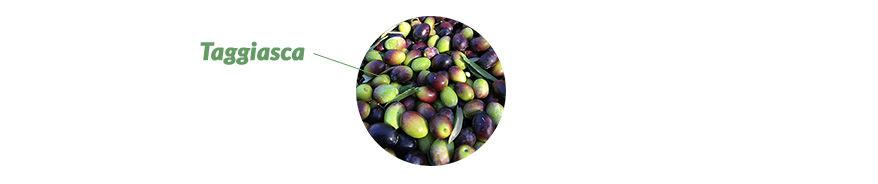 Schwarze und grüne Taggiasca Oliven Ligurien Italien